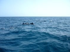 Dolphins :)))