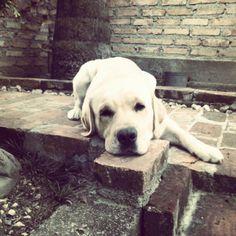 Dig my dog!!!