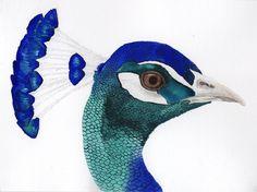 watercolor paintings & fine art prints by betweenforestandsea Peacock Crafts, Peacock Bird, Watercolor Bird, Watercolor Paintings, Peacock Painting, Pigment Ink, Simple Art, Fine Art Paper, Fine Art Prints