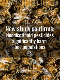 Largest Ever Neonicotinoid Pesticides Study Shows Massive Damage to Bees American Agriculture, Giant Food, Environmental Studies, Food Facts, Bee Keeping, Permaculture, Outdoor Gardens, Food Processor Recipes, Thats Not My