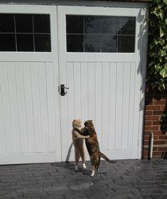 9.A conturbada maneira de os gatos provarem seu amor um pelo outro