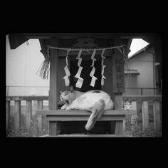 https://flic.kr/p/ujcgJF | Shiro June 2015  #cat #smallcats #blackandwhitephotography