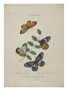 Album Donovan : an epitome of the natural history of insects in China Giclee Print
