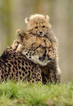 protetto dalla mamma