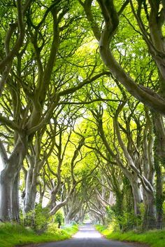 Dark Hedges, Northern Ireland -- I'm glad we went. We got some nice pictures out of it, even though it was hard to find good timing in between busloads of tourists and cars who park right in the middle. Beautiful World, Beautiful Gardens, Beautiful Places, Places To Travel, Places To See, Adventure Is Out There, Hedges, Northern Ireland, The Great Outdoors