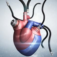 Having a Ventricular Assist Device (VAD) is basically like having two hearts – one of which is a mechanical device. Concept, Heart, Anatomy, Hearts, Artistic Anatomy