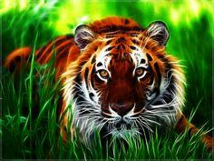 Tiger Desktop Wallpaper | Get the best size of Tiger Wallpaper and Desktop tiger wallpapers here ...