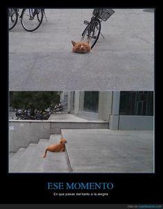 Pobre gatito :O Ah, no, espera... - En que pasas del llanto a la alegría   Gracias a http://www.cuantarazon.com/   Si quieres leer la noticia completa visita: http://www.estoy-aburrido.com/pobre-gatito-o-ah-no-espera-en-que-pasas-del-llanto-a-la-alegria/