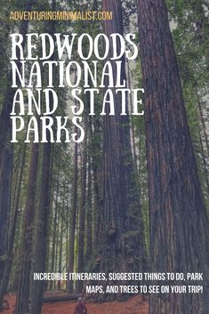 Traveling to the Redwoods soon and looking for more information from someone who has been there? Check out my suggested list of things to do, itineraries, and trees to see! #redwoods #nationalparks