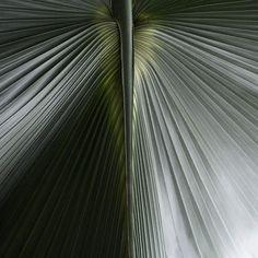 Palm - Carol Sharp - Kew Gardens Botanical Prints - Kew Botanical Prints