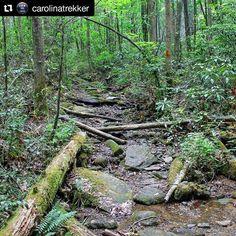 REPOST @carolinatrekker  SC has some wild rugged and remote hiking areas and the Mountain Bridge Wilderness is one of them. Here is a portion of the Coldspring Branch Trail that illustrates the point well. #TrailTuesday : : : :  #carolinatreker #hike #hiking #trail #mountain #mountains #landscape #adventure #outdoors #outside #nature #mountainbridgewilderness #scstateparks #greenvillesc #greenville #yeahthatgreenville #trees #wilderness #forest