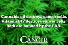 "We can't mention this enough. The answers are being kept from us. ""Cannabis oil destroys cancer cells. Vitamin B17 destroys cancer cells. Both are banned by the FDA."" Please re-pin to help us spread the truth & educate others. Together we are changing the world and saving lives everyday. Join us for much more great information on The Truth About Cancer! <3"