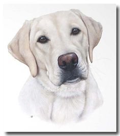 Pet Art - Zak (Yellow Labrador) - dog portrait