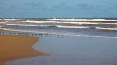 minha praia, meu quintal... litoral norte do rio grande do sul, brasil... a busca por alimento...