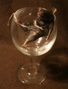 Taxidermy Mouse in a Wine Glass