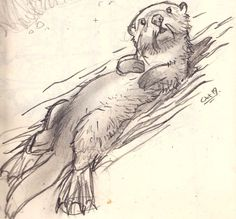 animal sketches Otter sketch - idea for a zentangle for my son. Pencil Drawings Of Animals, Animal Sketches, Art Sketches, Art Drawings, Drawings Of Fairies, Drawing Animals, Otter Tattoo, Back Drawing, Sea Otter
