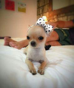 Omg look at her head band ssooo stinking cute