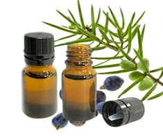 Essential Oils for Cellulite and Stretch Marks Removal. Learn how to reduce of cellulite and stretch marks with rosemary, grapefruit essential oil . Juniper Berry Oil, Juniper Berry Essential Oil, Grapefruit Essential Oil, Best Oils, Best Essential Oils, Essential Oil Uses, Stretch Mark Removal, Stretch Marks, Essential Oils Wholesale