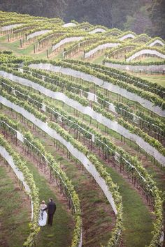 Wedding in the North Georgia vineyards