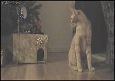 random.cat -- meeooooow