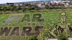 May the rice be with you: This 'Star Wars' paddy is a must-see