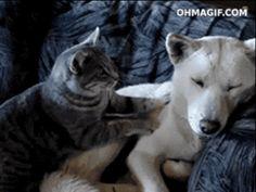 30 photos qui prouvent que les chats aussi ont un coeur, parfois