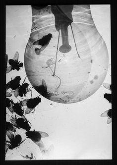 affection  - camera obscura / photogram - 2011 ©péter tóth