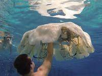 медузы фото: 33 тыс изображений найдено в Яндекс.Картинках