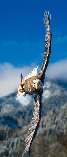 Amazing Flying Bird