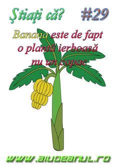 Curios,si,ce am invatat,la botanica,dar nepoteii nostri ? Cultura General, Romania, Portal, Motivational, Facts, Geography, Truths