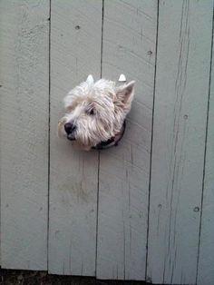 Smaller dog or larger hole
