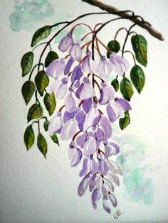 Wisteria Painting by Karin Dawn Kelshall- Best Watercolor Flowers, Watercolor Paintings, Watercolour, Tole Painting Patterns, Small Paintings, Face Paintings, One Stroke Painting, Face Painting Designs, Botanical Drawings