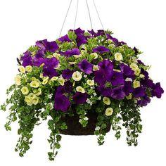 花が大きな種類と小さな種類の組み合わせ