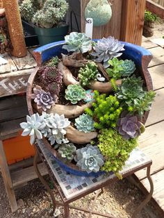 Save your broken pots! I saw this at Succulents Gardens in Moss Landing and loved it ! : Save your broken pots! I saw this at Succulents Gardens in Moss Landing and loved it ! Mini Cactus Garden, Fairy Garden Pots, Herb Garden Design, Garden Beds, Garden Plants, Succulent Landscaping, Succulent Gardening, Succulent Pots, Planting Succulents
