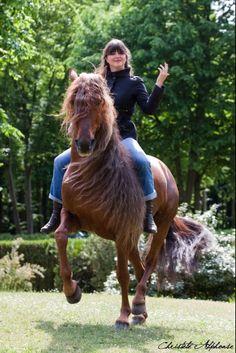 Clemence Faivre - Horse Show