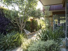 Whilst there was no brief, I wanted the garden to have a seamless connection to the outdoors. The living area opens across the corners, as well as on… Back Gardens, Small Gardens, Outdoor Gardens, Modern Landscaping, Outdoor Landscaping, Australian Native Garden, Fudge, California Garden, Traditional Landscape