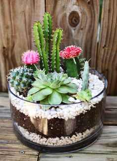 DIY Cactus Garden Idea... This is cute, but you can literally buy the same thing at Lowes for probably the same price.