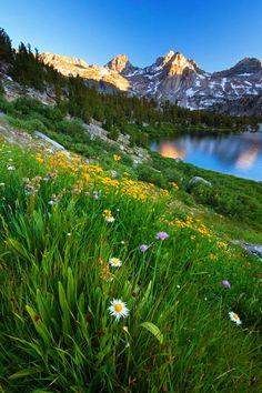 Rae Lakes Wildflowers Rae Lakes National Park, King's Canyon Sierra Nevada CALIFORNIA USA - mohamad masoumi - Google+