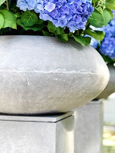 """97 Hits for """"division"""" Gardening, Hydrangea, Division, Planters, Vase, Home Decor, March, Grey, Limelight Hydrangea"""