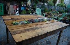 succulent, table, far, out, flora, garden, dog, succulents, pallet, wood, pallets, patio, deck, yard, chair, chairs