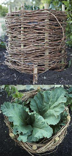 Rhubarb baskets made from vine runners | Babylonstoren