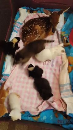Baby Animals Super Cute, Cute Little Animals, Cute Funny Animals, Cute Cats, Baby Animals Pictures, Cute Animal Pictures, Animals And Pets, Farm Animals, Cute Animal Videos