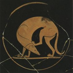Must visit - Pitt Rivers Museum, Oxford. The Euergides Painter (active c. 500 BC) Detail of a Laconian hound scratching its head, from an Attic red-figure cup c. Classical Greece, Classical Art, Ancient Greek Art, Ancient Greece, Greyhound Kunst, Happy National Dog Day, 7 Arts, Greek Pottery, Art Antique