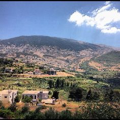 Lebanon, Chouf, Barouk Cedar Reserve on top of mt.
