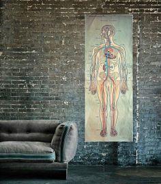 Very Large 1950's Human Anatomy School Chart / by VintageMedreana, $265.00