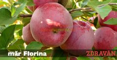 măr Florina Mango, Garden, Horsehair, Plant, Manga
