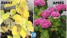 Plante Zz, Fleur Orange, Gardening Tips, Plus Jamais, Messages, Miracle, Plants, Ph, Gardens