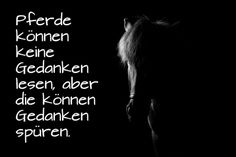 ▷ 1001 + Ideen zum Thema schöne Pferdebilder und Pferdesprüche here you will find a small black horse with black eyes and a white mane and a short horse saying, nice horse picture Beautiful Horse Pictures, Beautiful Horses, Horse Quotes, Horse Sayings, Farmhouse Bathroom Art, Epic Texts, Horse Riding, Wallpaper Quotes, Funny Images