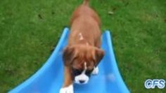 Puppies versus slides,now what?