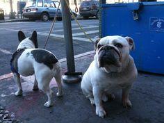 Bulldogs in Brooklyn, pure inspiration